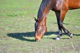 Horses at the farm - 209182093