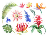 Watercolor vector set with tropical leaves and bright exotic flowers isolated on white background. - 209192451