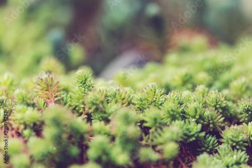 Fotobehang Galyna A. Green grass