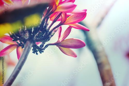 Fotobehang Galyna A. Tropical flowers