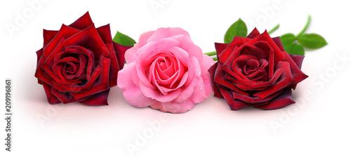 Leinwanddruck Bild Rosen 939