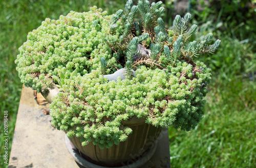 Fotobehang Galyna A. Green flower