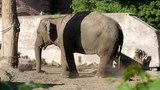 elephant sprinkles itself with the help of a trunk to protect itself from flies in the zoo - 209206068