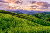 Beautiful step of rice terrace paddle field in sunset at Chiangmai, Thailand. Chiangmai is beautiful in nature place in Thailand, Southeast Asia. Travel concept.