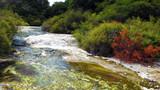 Geyser in Rotorua
