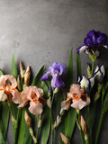 Natural background with iris flowers