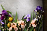 Natural background with iris