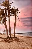 palm trees on white sand beach - 209216669