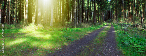Summer forest with sun beam and road. - 209221831