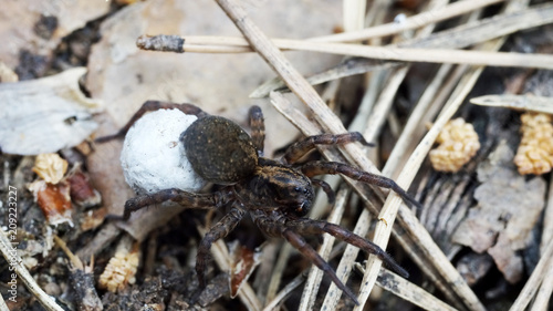 Foto Murales spider in the forest close-up