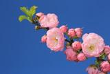 pink flowers brunch - 209224820