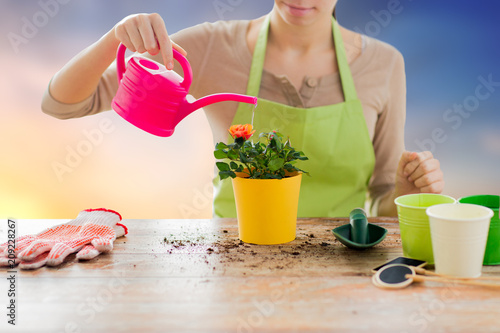 Wall mural gardening, flower planting and people concept - close up of female gardener watering roses with can over sky background
