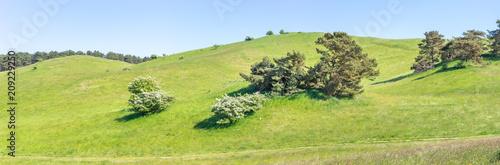 Hügelige Weidelandschaft - 209229250