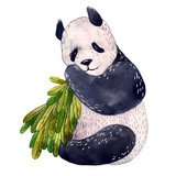 Watercolor panda isolated on a white background. Watercolor illustration. - 209236683