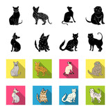 Turkish Angora, British longhair and other species. Cat breeds set collection icons in black,flet style vector symbol stock illustration web. - 209236820