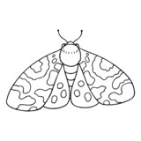 Moth cartoon illustration isolated on white background for children color book