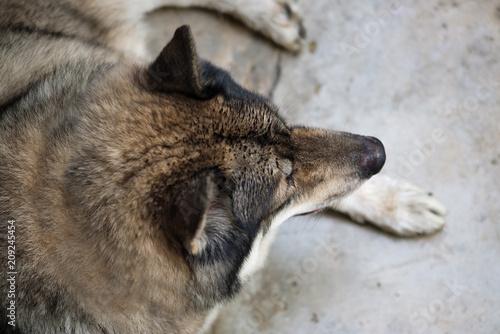 Aluminium Wolf Wolf.