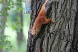 squirrel - 209246661