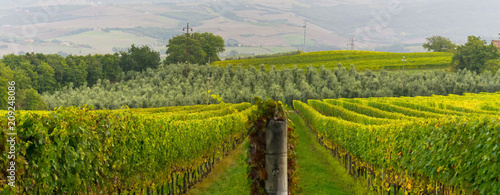 Canvas Toscane rows of grape vines in Tuscany