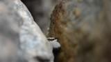 Ants Walking on a Rock - 209252625