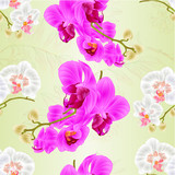 Seamless texture stems orchids Phalaenopsis White and purple flowers and buds tropical plants  vintage vector botanical illustration for design hand draw