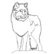 Lupo vettoriale, illustrazione - 209257499