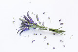 Bunch of Lavender flowers on a white background - 209261810