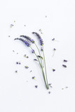 Bunch of Lavender flowers on a white background - 209261831