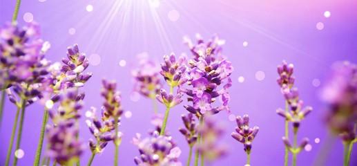 Lavendel mit Bokeh und Sonnenstrahlen © S.H.exclusiv