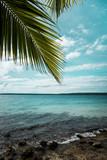 under the palmtree - 209264455