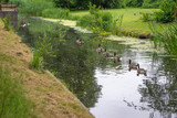 Group of ducks swimming through channels in the one of many parks in Hague, Netherlands - 209265021