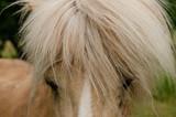 Pferdehaar Haflinger - 209268632