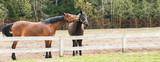 horses grazing in a field near the paddock - 209269063