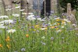 Wild flowers in an English churchyard - 209270023