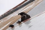 Curious dog on balcony - 209271454