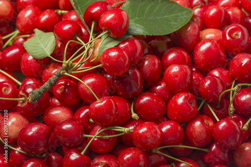 Foto Spatwand Kersen the background from fresh red cherries