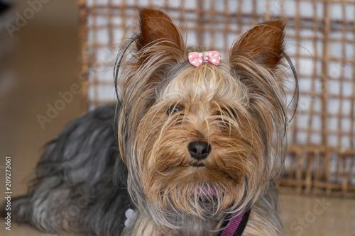 Foto Murales Small cute doggy