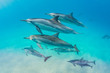 Dolphin pod swimming over sand