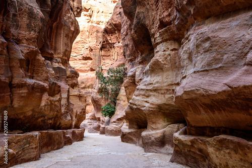 Aluminium Bruin Giordania, Petra