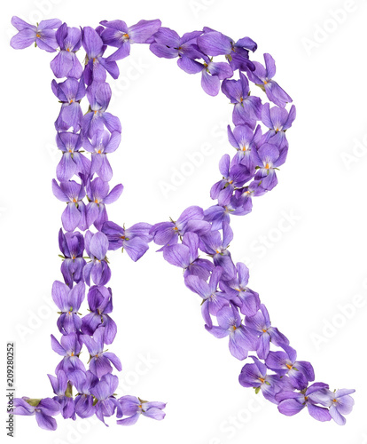Foto Murales Letter R from alphabet, from flowers of violet, isolated on white background