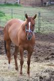 horse - 209285433