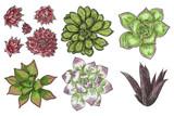 Hand drawn wild tropical house Succulent plants set. Scandinavian mood home decor creator. Elements for card design. Air plants for terrarium. Vector. - 209294099