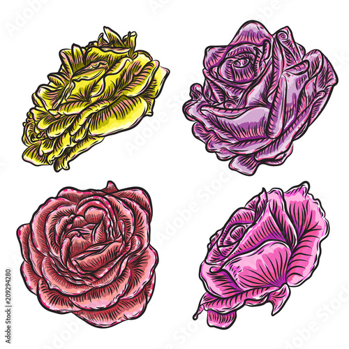 Big collection of roses in color for design. Set of highly detailed flowers in hand drawn style. Vector. - 209294280