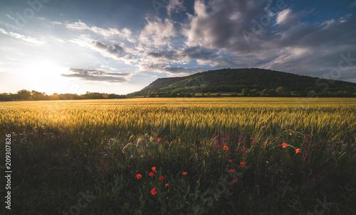 Pole złote oświetlone przez ustawienie słońca z Hill Braunsberg i pochmurne niebo w tle