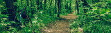 A sports bike is parked near a path in a green forest, a wide panorama - 209311623