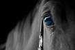 amazing Horse with beautiful blue eyes