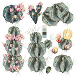 Collection of vector realistic cactus with flowers - 209332880