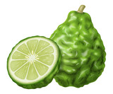 Kaffir lime or makrut lime. Vector illustration.