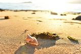 seashell on sandy seashore background - 209343268