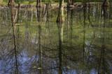 Sumpfzypressen mit Spiegelung, Rombergpark, Dortmund, Nordrhein-Westfalen, Deutschland, Europa - 209346429